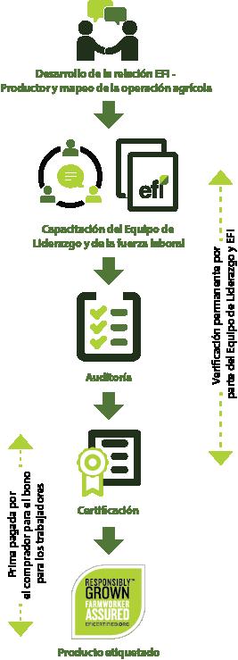 Conoce más acerca del proceso de certificación. Certification Process f59b71466357